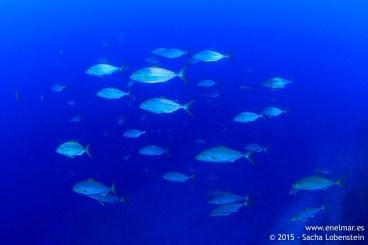 20150815-1035-SachaLobenstein-enelmar.es-Baja del Realejo