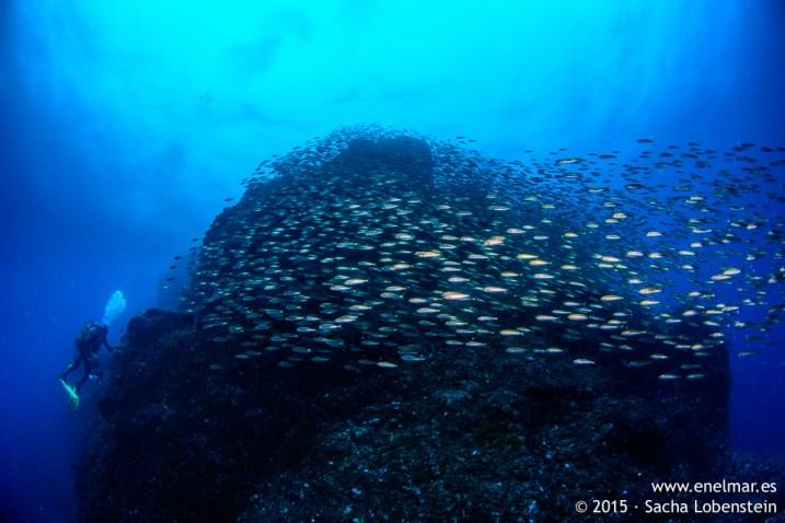 20150815-1102-SachaLobenstein-enelmar.es-Baja del Realejo