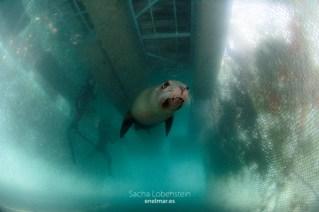 20160531-1204 - Sacha Lobenstein - enelmar.es - Oceanarium Explorer