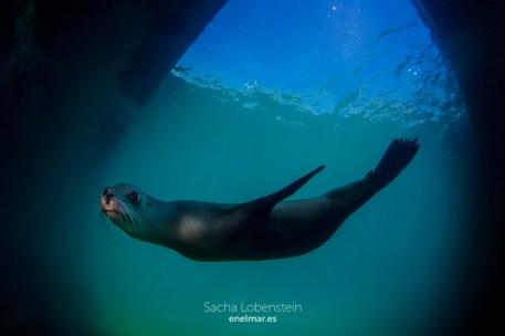 20160604-1118 - Sacha Lobenstein - enelmar.es - Oceanarium Explorer