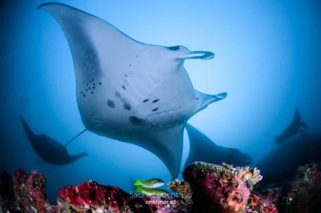 20170129-0912 - Sacha Lobenstein - enelmar.es - Moofushi Reef