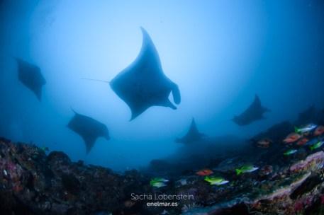 20170129-0918 - Sacha Lobenstein - enelmar.es - Moofushi Reef