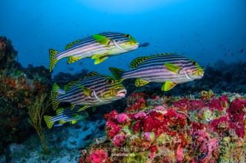 20170129-1216 - Sacha Lobenstein - enelmar.es - Moofushi Reef