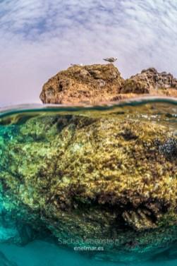 20170626-1018-SachaLobenstein-enelmar.es-Playa Chica < Puerto del Carmen-2