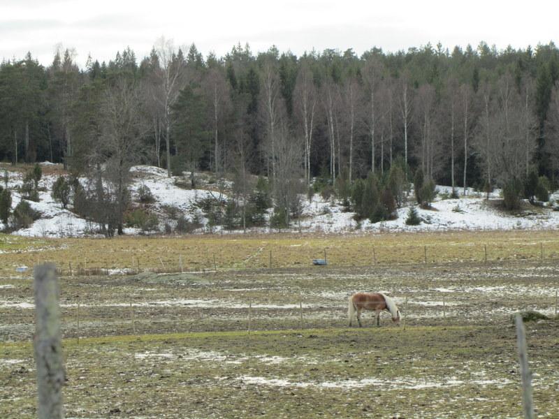 Häst i hage i Tyresta