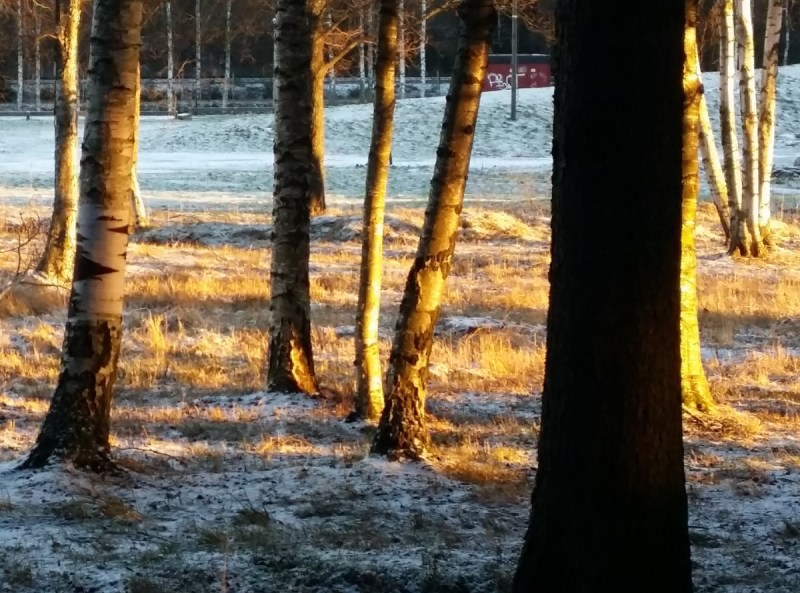 Sol i vinterskog