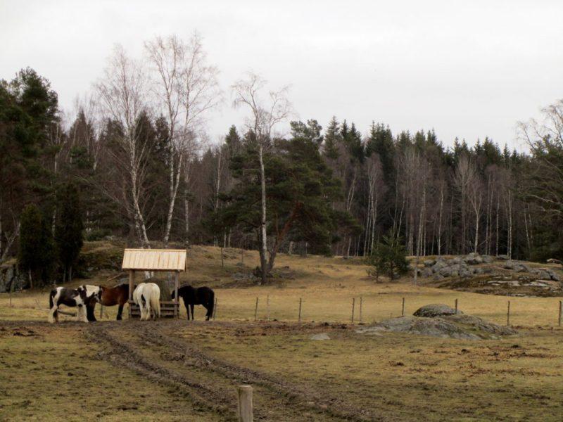 tyresta by hästar