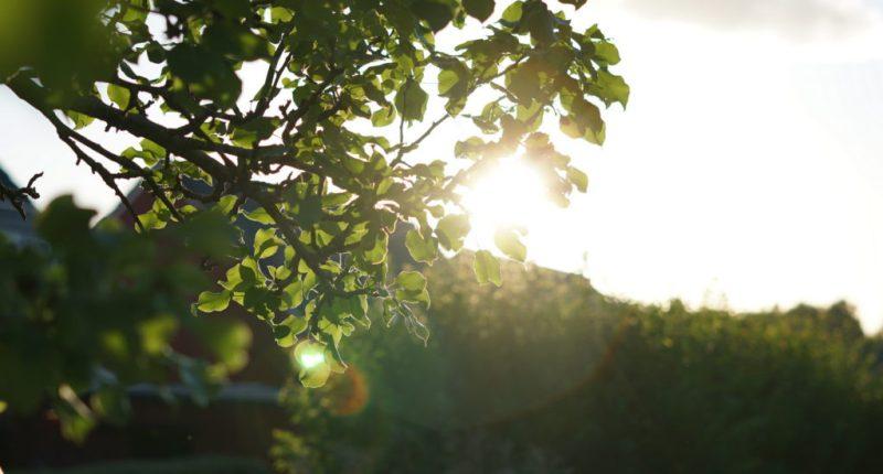 bild på träd och solnedgång inlägg om hälsoregler