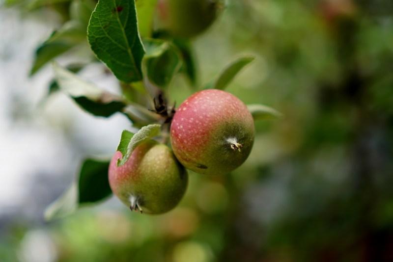 ägodela 3 äpplen