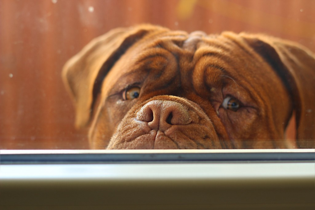 Anche i cani muoiono d'amianto