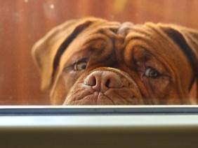L'amianto è dannoso anche per gli animali