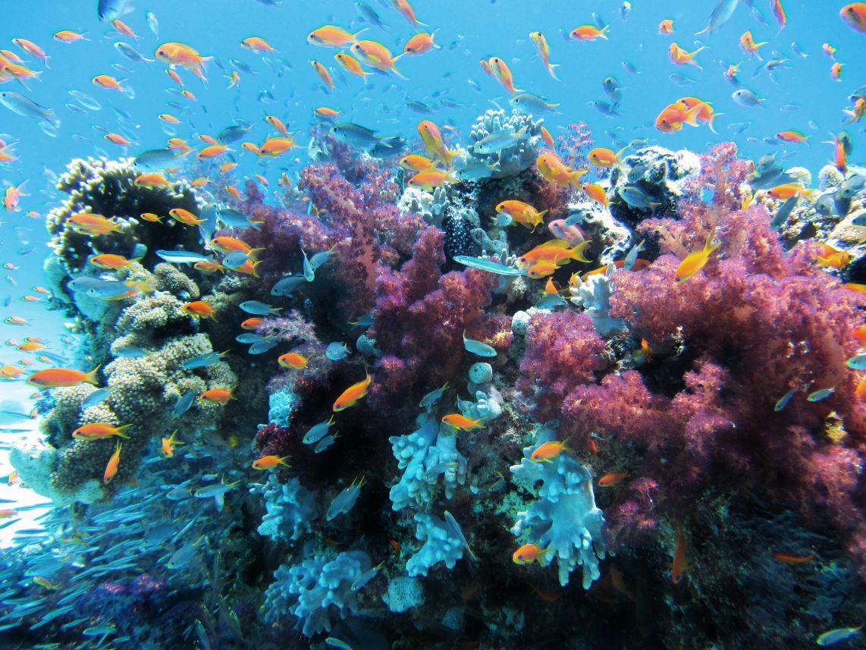 Coralli replicanti contro l'inquinamento da mercurio