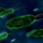 Sperimentazione batteri nel trattamento dei rifiuti