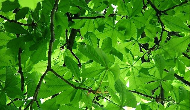 Energía solar de los árboles
