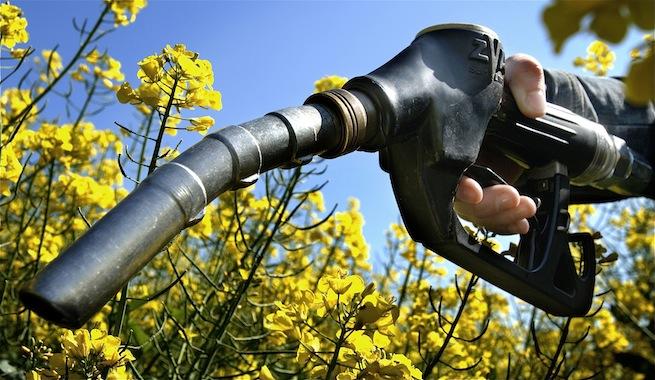 Las bostas de caballo impulsan la producción de biocombustibles