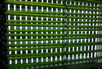 Un informe duda de la sostenibilidad del biocombustible con base en algas