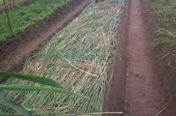 abris agricole