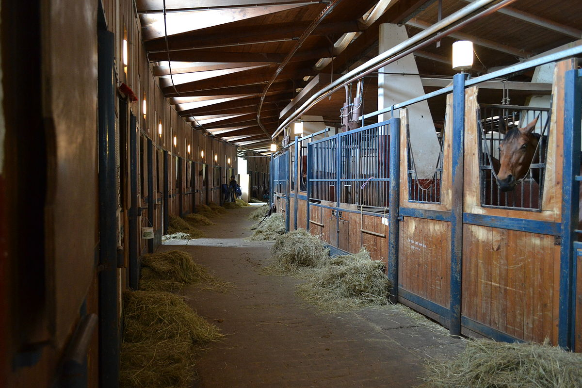 abris chevaux occasion