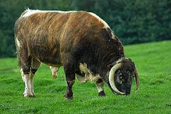 animaux de ferme a vendre