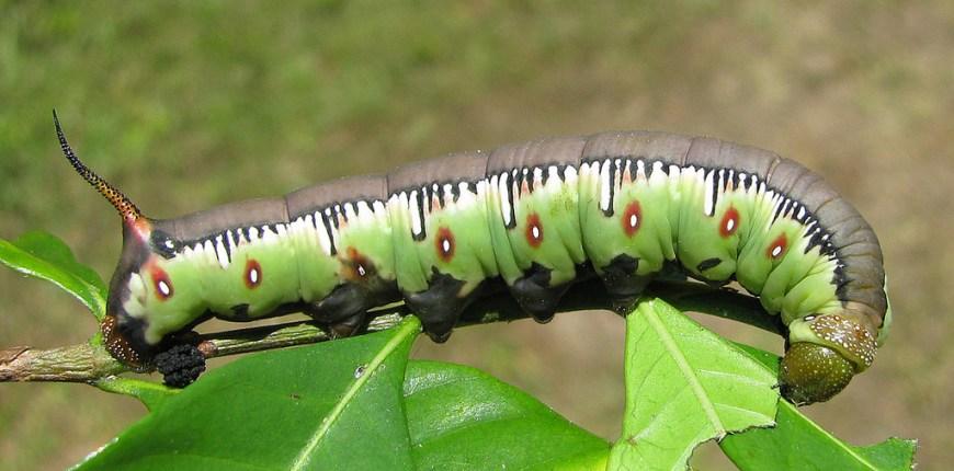 caterpillar b