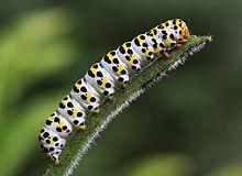 ce caterpillar