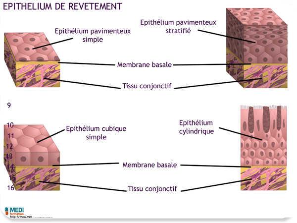 cellule de stockage céréale