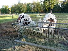 chariots élévateurs