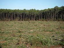 gyrobroyeur forestier occasion