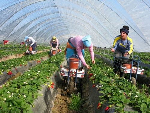 pompe irrigation agricole
