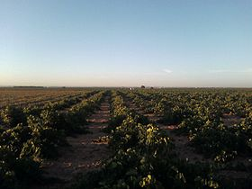 viticole ou vinicole