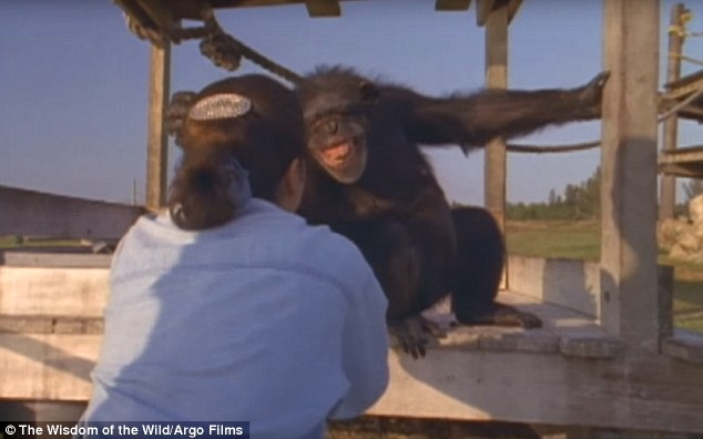 ch02 - Šimpanzi poznali svou pečovatelku po 25 letech