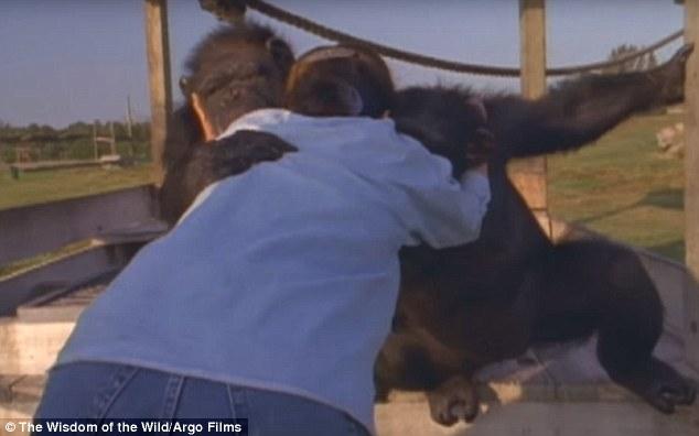 ch03 - Šimpanzi poznali svou pečovatelku po 25 letech