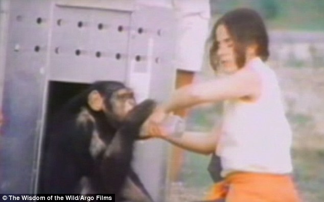 ch08 - Šimpanzi poznali svou pečovatelku po 25 letech