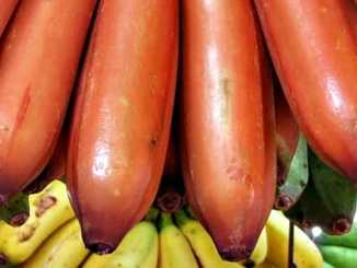 a682d06d00bedd05b280b406bd907378 - Červený banán je mnohem výživnější než žlutý