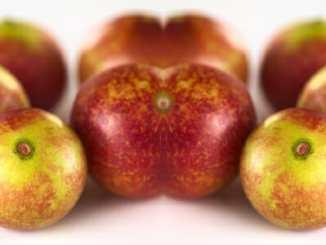 10267932f3479cf7f51ae4655a4fb470 - Ovoce camu camu jako pomoc pro astmatiky
