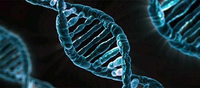 Vzpomínky se mohou dědit prostřednictvím DNA.