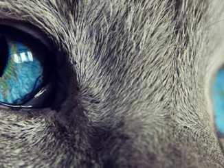 c398e4e3f48450ab743d9e3c4bace217 - Naše kočka vidí, co my ani nemůžeme