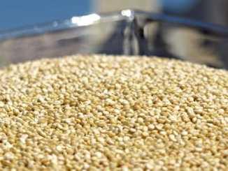 Quinoa - 11 prokázaných zdravotních přínosů.