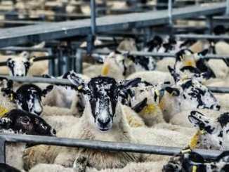964587ec090246e417bdddd1d72cb43b - Karnismus je důvodem, proč lidé jedí maso?