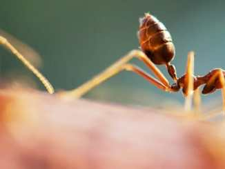 641f4e1d8d872bbc2e92535f87a195cf - Vyzkoušejte přírodní bič na domácí mravence