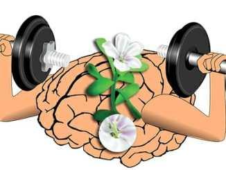 Brahmi - posilovač vědomí, zkušenosti a účinky na neuronové cesty mozku.