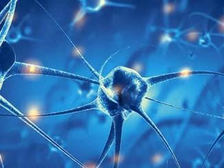 Neurony umějí počítat a rozeznávat číslice.