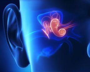 Střední ucho.