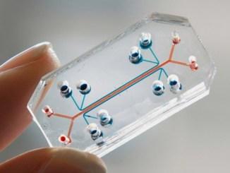 Testování na zvířatech zvoní hrana díky speciálnímu čipu.