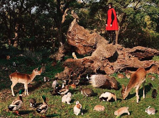 gucci inside - Gucci, přestaňte zneužívat v reklamě divoká zvířata