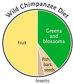 02chimp pie chart1 - Institut moderní výživy vs. dokument Game Changers