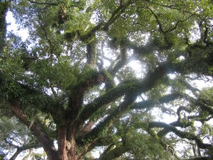 Covington Tree: The trunk is a mixture--much like the body of Christ