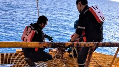 Photo of El equipo de una plataforma rescata a un perro que nadaba a 217 km de la costa