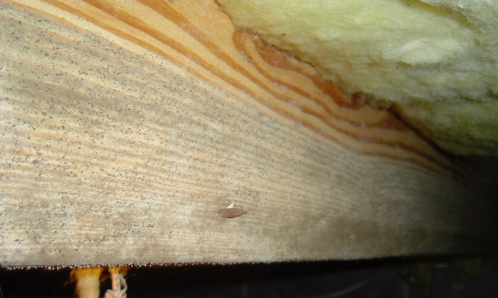 Mold On A Floor Joist In Vented Crawl Space With High Humidity
