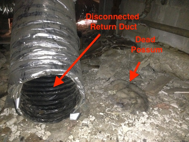 Dead possum near a disconnected return duct, annotated photo